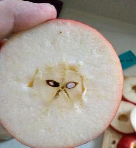 愤怒的苹果核表情